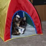 Sammie's Tent