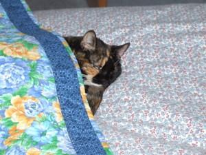 Tucked In Kitty