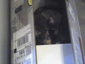 Sammie in a box